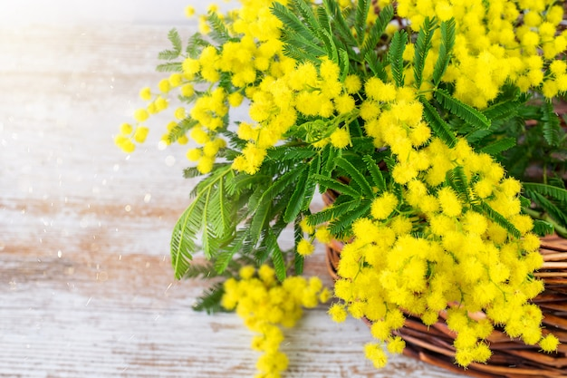 Bunches of spring mimosa in basket on the wooden natural background
