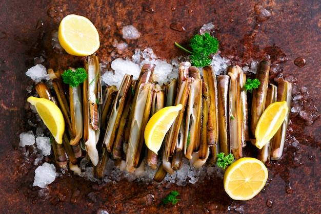 Bundle, bunch of fresh razor clams on ice, dark concrete background, lemon, herbs.