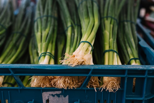 Bundle of spring onions in crate