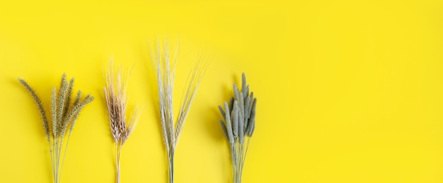 乾いた草の束-黄色の背景にライ麦、小麦、サイモップ、フォックステールメドウ