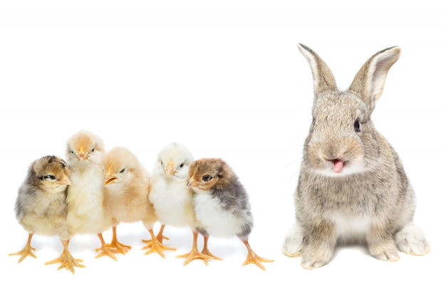 Bunny and chicken