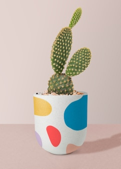 Bunny ears cactus in a pot