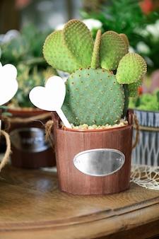 Bunny ears cactus in vase in the flowers shop