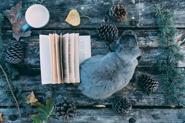 Bunny pet and book on a wooden table with coffee and pines outdoor