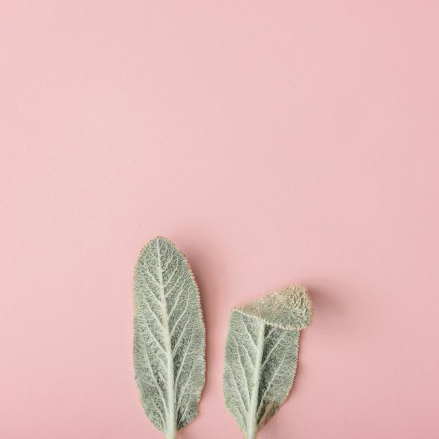 パステルピンクの自然な緑の葉で作られたバニーウサギの耳。ハッピーイースターの最小限のコンセプト。
