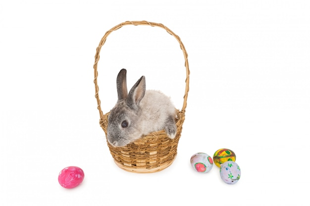 Bunny rabbit sitting on the basket with easter eggs on white background