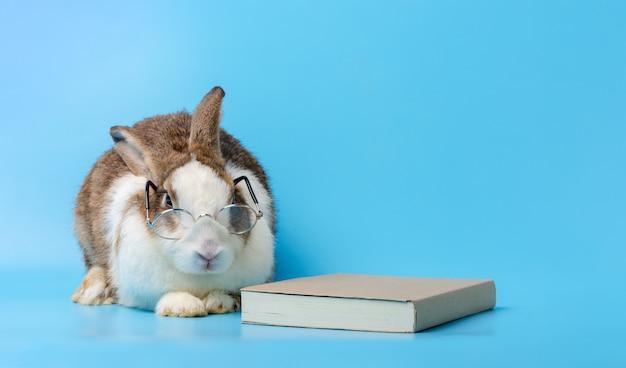 안경와 파란색 배경에 책 토끼. 교육 개념.