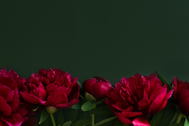 Burgundy peonies on a green background.