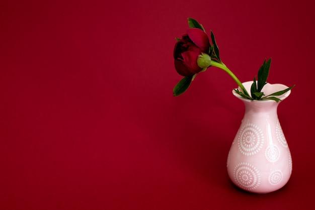 Burgundy peony in a pink vase on a dark burgundy