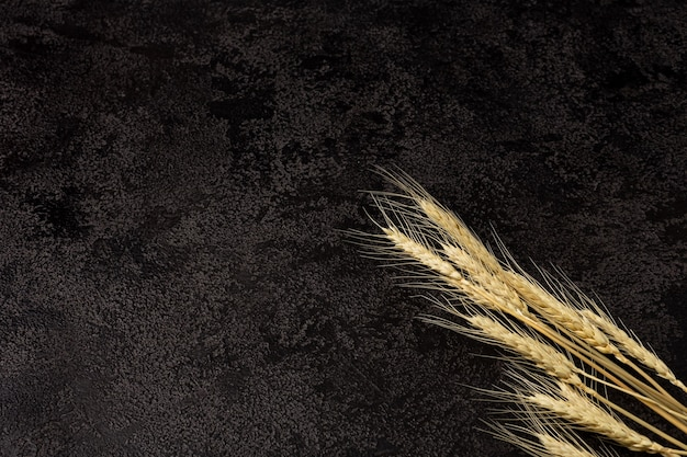 Burlap napkin on a dark structural background top view ears of wheat copyspace top view