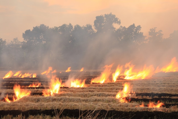 Burn dry straw in the field on the side of the road in thailand