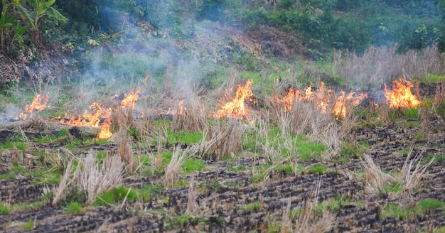 Burn a farm agriculture the farmer use fire burns stubble on the field smoke causing haze with smog air pollution cause of global warming concept , forest and field fire dry grass burns