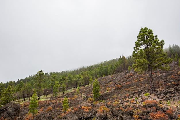 Caldera de taburiente nature park, la palma island, canary islands, spain의 불타는 숲