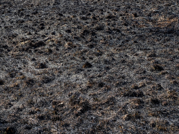 焦げた草。焦げた草のある畑。意図的な放火。昆虫の破壊。生態学的災害。