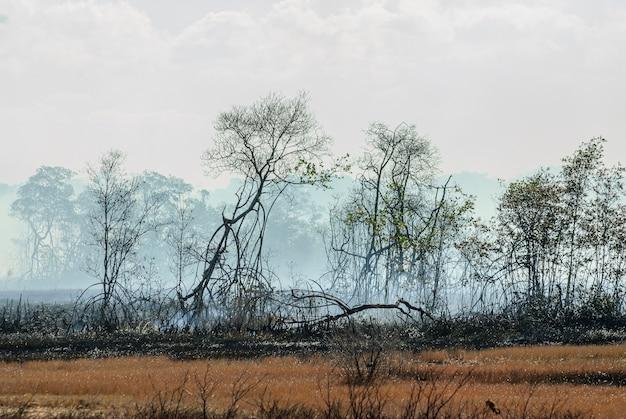 ブラジルのパライバ州ピティンブで、火の煙の木と灰の土壌のあるマングローブで燃やされた