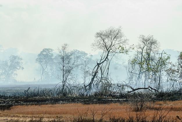 Сгоревшие в мангровых зарослях с огнем, дымом деревья и почва из пепла в штате питимбу параиба, бразилия.