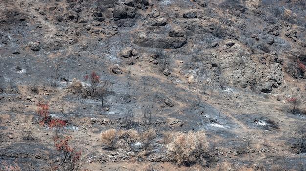 불타는 나무와 재로 덮인 땅. 산불로 파괴된 산비탈의 숲