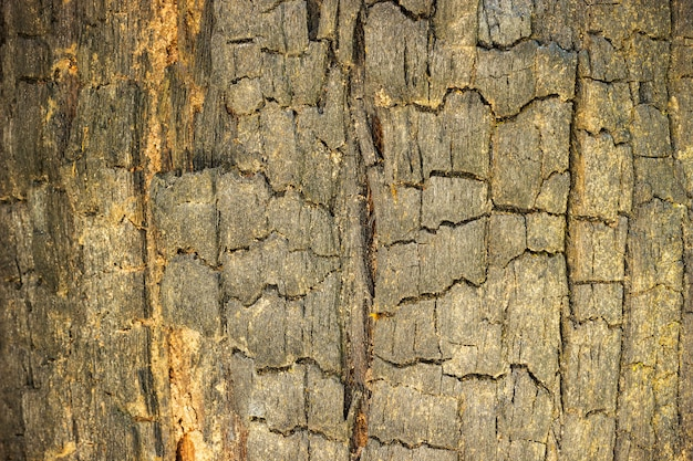 Burned wood texture background. concept of nature conservation and global warming.