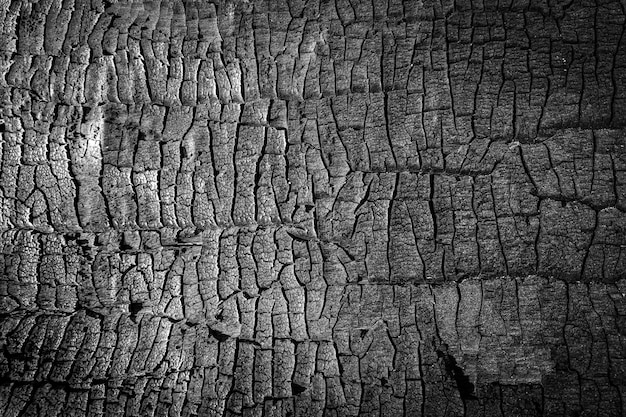 Burned wood texture. close up black scratched wooden background. details on the surface of charcoal