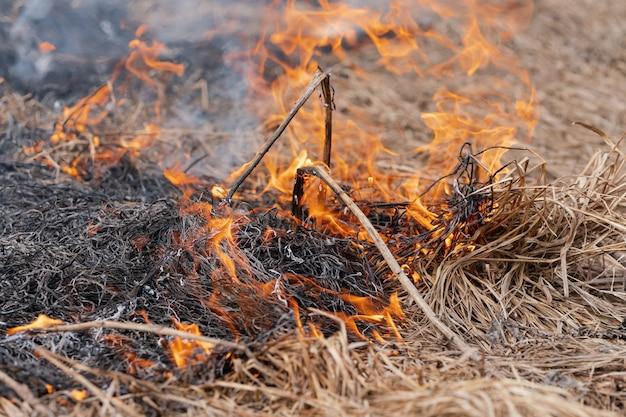 봄 숲의 초원에서 마른 풀을 굽기. 불과 연기는 모든 생명을 파괴합니다. 소프트 포커스, 산불에서 흐림.