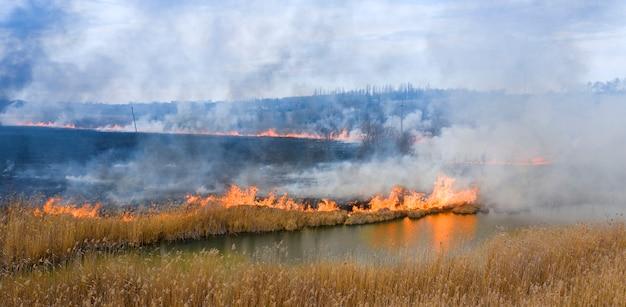 Горящая сухая трава возле леса. экологическая катастрофа с вредными выбросами в атмосферу.