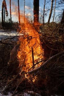 Горящий огонь. горит костер в лесу. текстура горящего огня. костер для приготовления пищи в лесу. текстура горящих веток