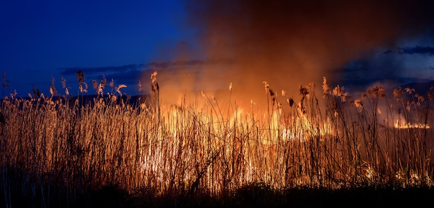 Burning fire at night on the reeds. smoke pollution.