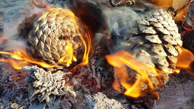 Burning pine cones on the beach