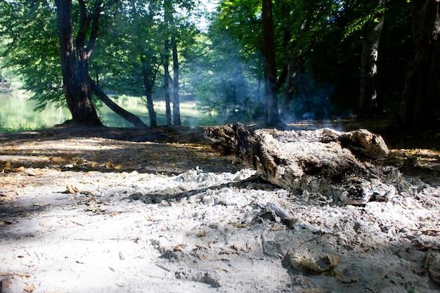 森の中で燃える木