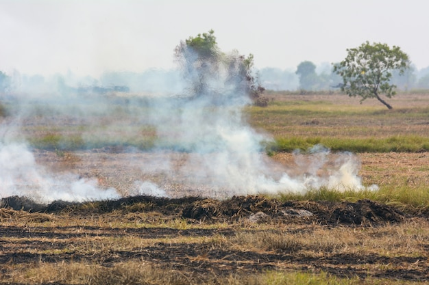 Burning weeds in the fields is one of the causes of pollution smoke