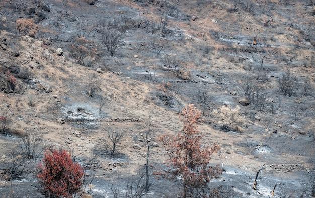 키프로스의 농촌 지역에서 산불이 발생한 후 타거나 마른 나무와 땅이 재로 뒤덮였습니다.