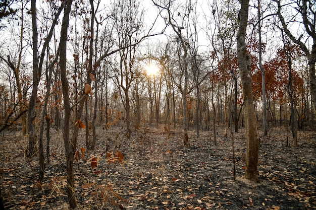 Burnt forest in the countryside from thailnad