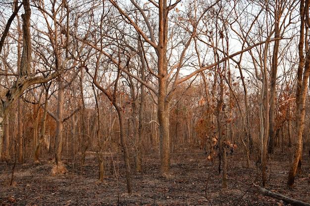 Сгоревший лес в сельской местности от thailnad