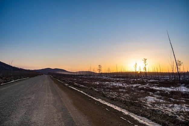 焼けた森で山火事の晴れた日没の夜の後の焼けた松の幹