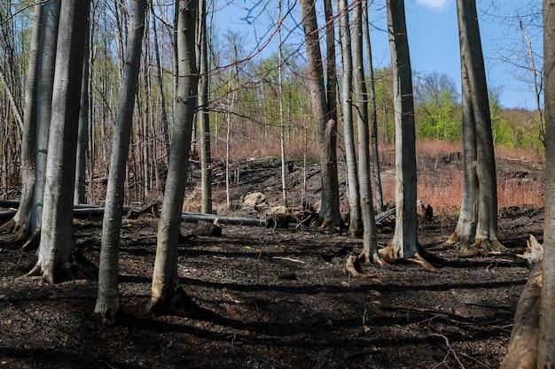 青い空を背景に山火事が発生した後の焦げた木自然災害