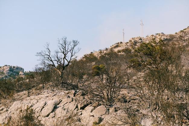 Сгоревшие деревья и кустарники после пожара черные обугленные растения Premium Фотографии