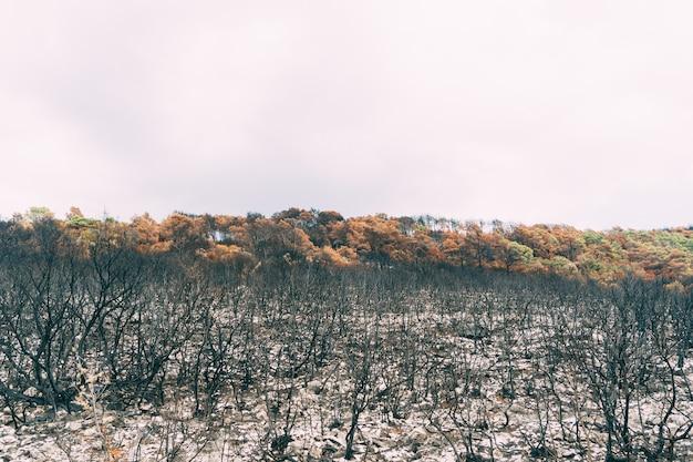 火事後の焦げた木や低木
