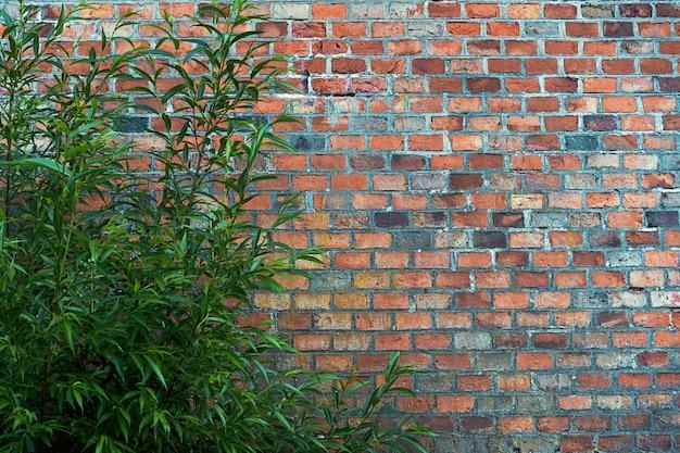 Premium Photo A Bush Against A Dark Red Brick Wall