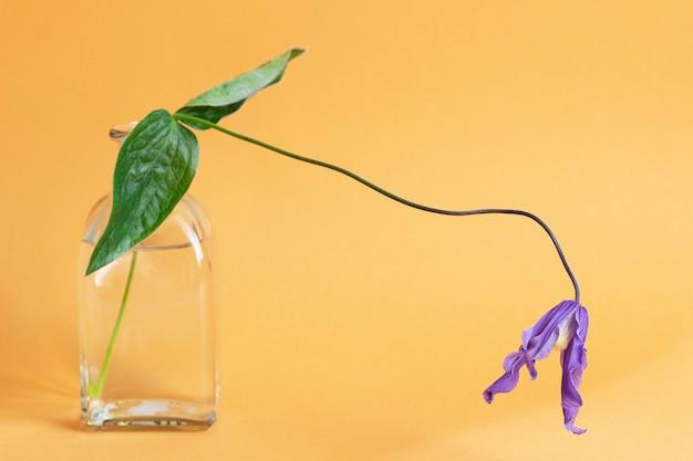 色付きの背景にガラスの花瓶のブッシュクレマチスの花