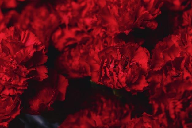 Bush cloves on neutral dark background