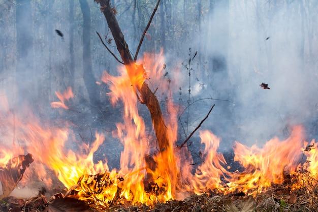Буш пожар уничтожает тропический лес