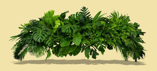 A bush of green leaves with a bright grey background and shadows of the sun summer tropical concept