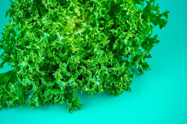 녹색 배경에 신선한 녹색 양상추 샐러드의 부시입니다.