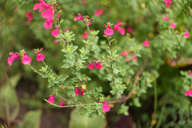 Bush with small flowers in garden