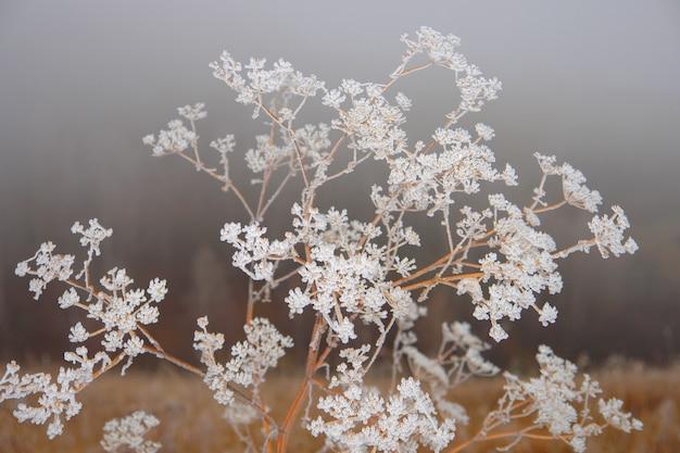 霜の茂みと草