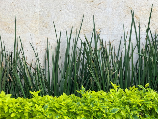 정원의 흰 벽 옆에 있는 덤불과 식물
