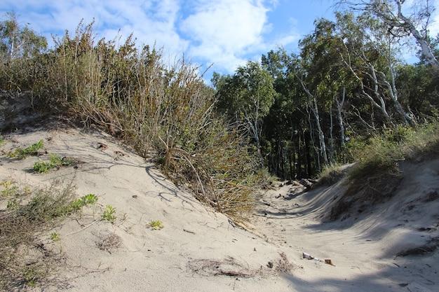 Кусты и деревья на песчаной дюне на берегу балтийского моря