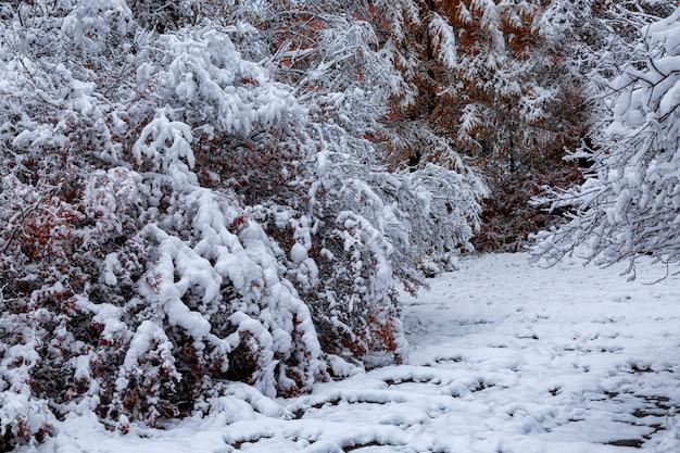Кусты и деревья с яркими осенними листьями, засыпанными снегом. погода, климат, смена времен года.
