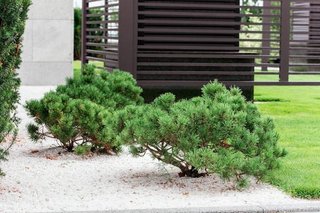 Bushes in the garden of bonsai