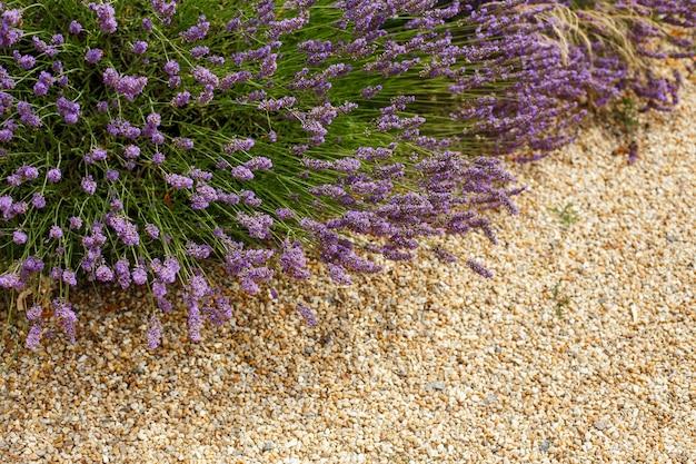 小石の上のラベンダーの花の茂み。庭に咲く美しい。ランドスケープガーデンデザイン